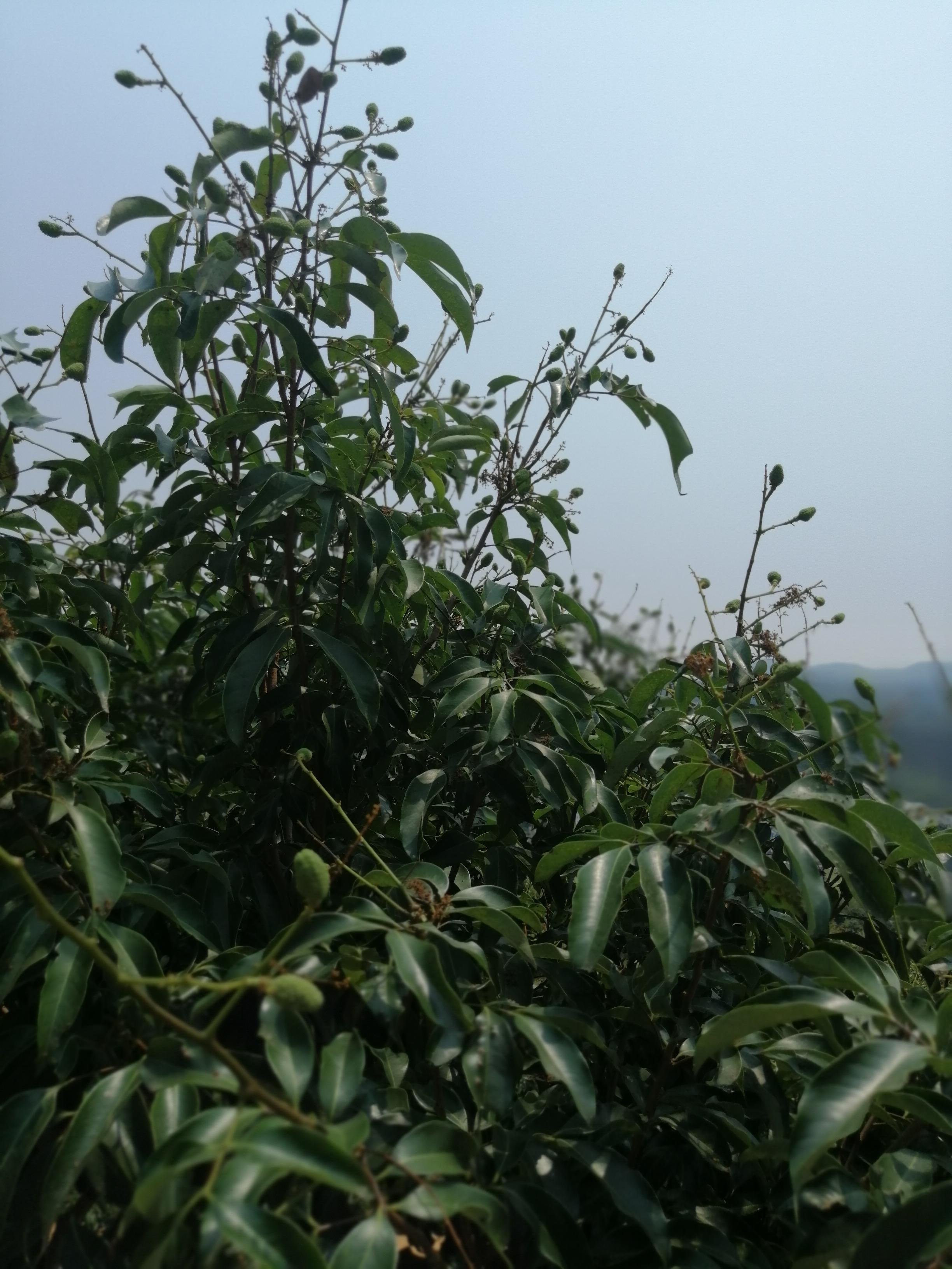 http://b2bwings-goods-image.oss-cn-shenzhen.aliyuncs.com/847f9d59-d256-40f4-b837-ce5610d642cd.jpg