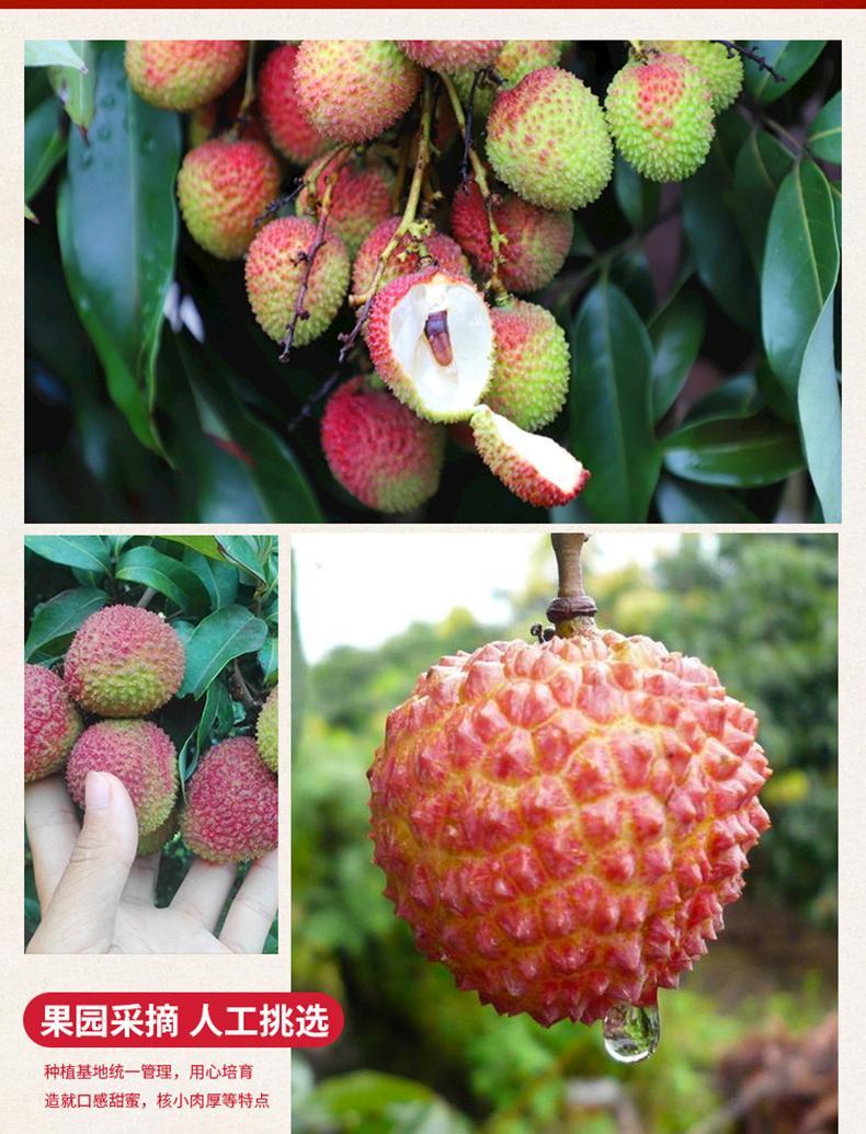 http://b2bwings-goods-image.oss-cn-shenzhen.aliyuncs.com/9052cd07-e4ab-49b8-a71d-81d6fe544a85.jpg