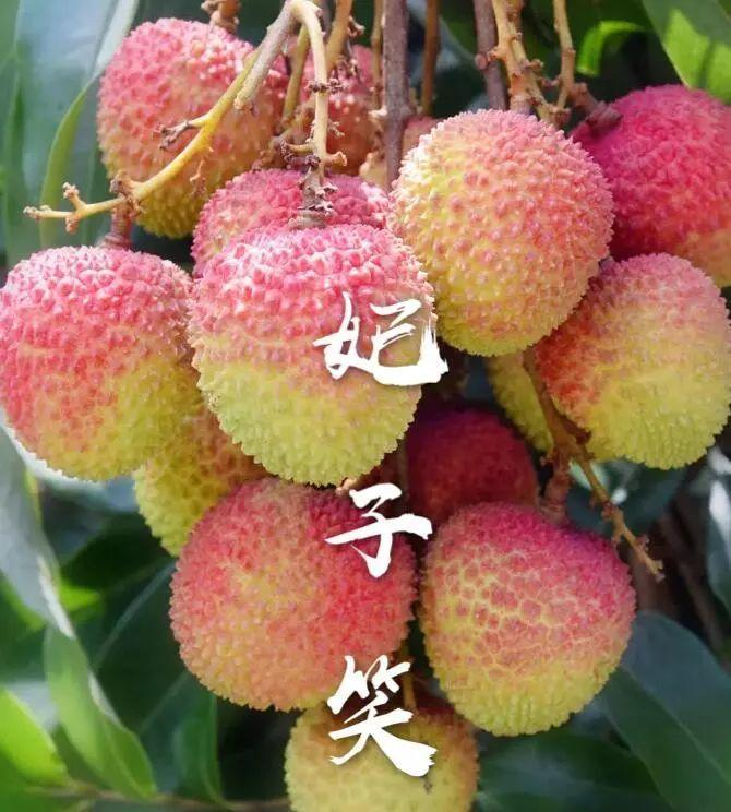 http://b2bwings-goods-image.oss-cn-shenzhen.aliyuncs.com/bfeb38ca-e079-4129-8404-53571f0cead7.jpg